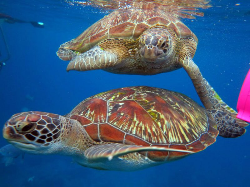 Snorkeling with two turtles at the Similan Islands