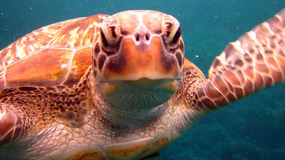 Close up of a turtle