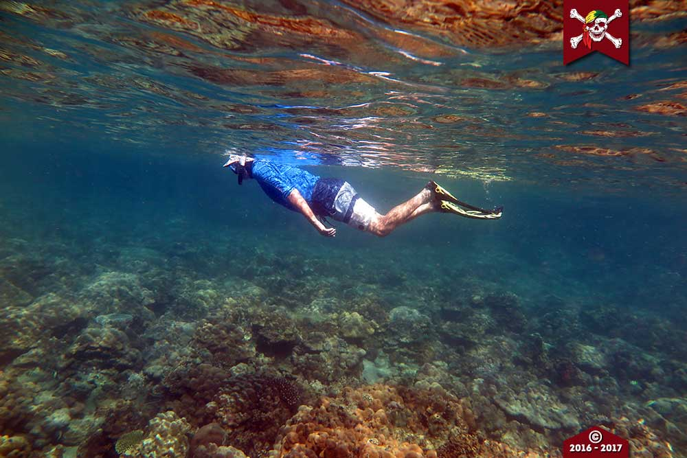 Snorkeling the pristine reefs at St Matthews Island