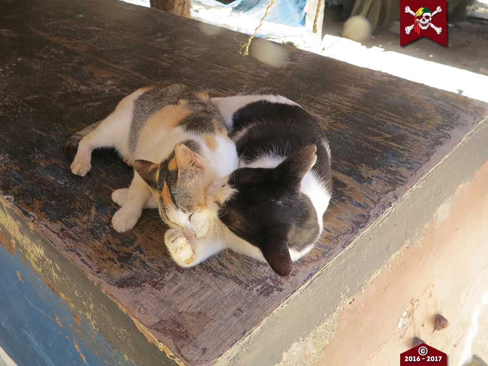 Cats cats on Surin Island