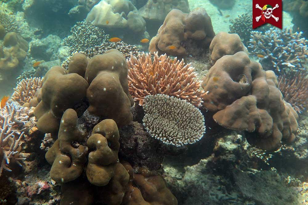 Corals at Surin