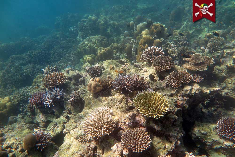 Coral Scene at Surin