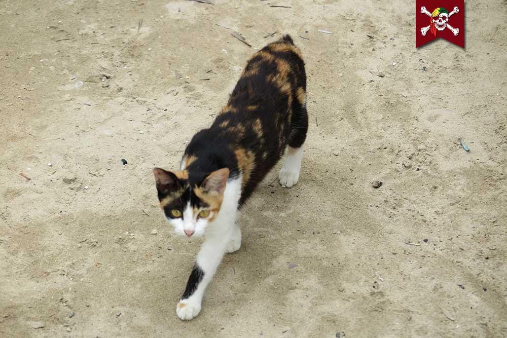 Moken Cat
